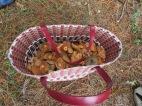 Cogumelos para o almoço